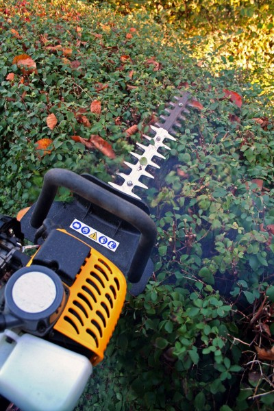 Bush and hedge trimming